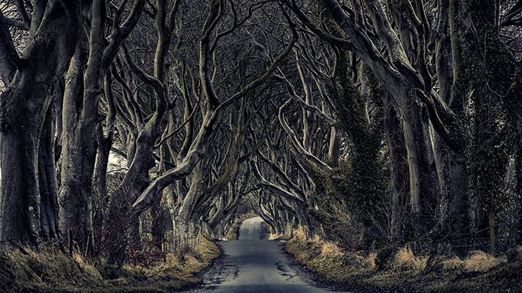 Dark-Hedges-Visit-Portrush-Northern-Ireland-compressor